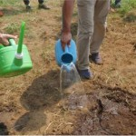 平にして肥料を混ぜて土をまく